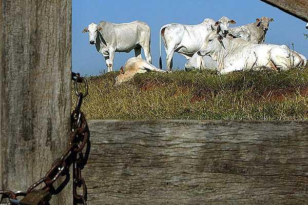 Brasil reclamar� ante la OMC si pa�ses no levantan restricciones tras caso de 'vaca loca'