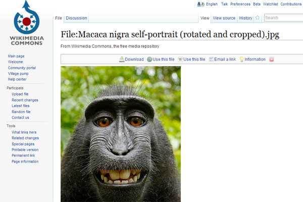 Oficial: Fotos tomadas por animales son de dominio público